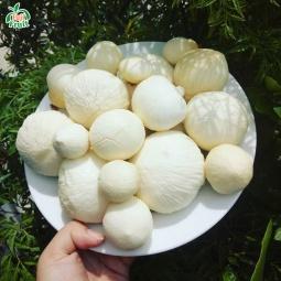 Mộng Dừa