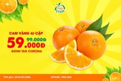 Cam vàng Ai Cập 59K-Đánh tan Virus Corona
