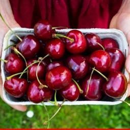 Cherry Australia