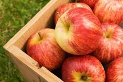 Làm thế nào để chọn được quả trái táo ngon?